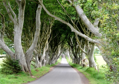 Dark Hedges HDR