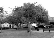 Comber Square