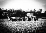 Harvesting Spuds.jpeg