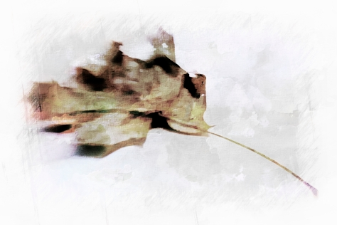 1 Leaf with Lens Baby 1_pe