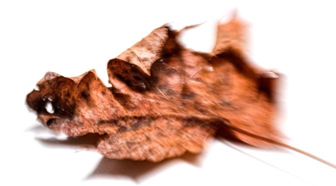 That Dead Leaf Again…