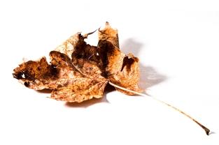 4 Leaf with RL Left 2