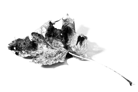 8 Leaf_Monochrome