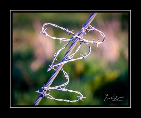 Barbed Wire 2.jpg