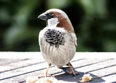 sparrow-4981674.jpg