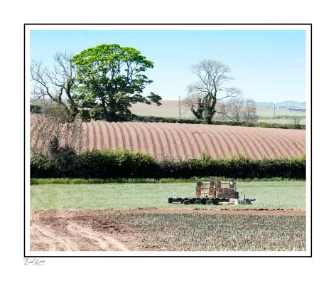 Comber Fields Up.jpg