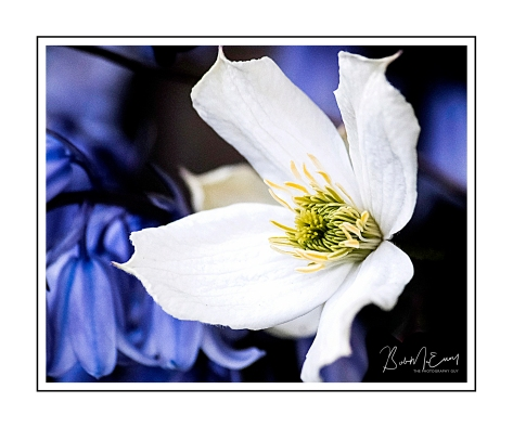 FlowerUp.jpg