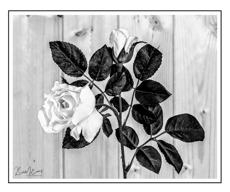 Rose_UP